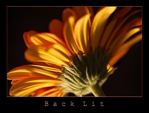 Back Lit by CollY