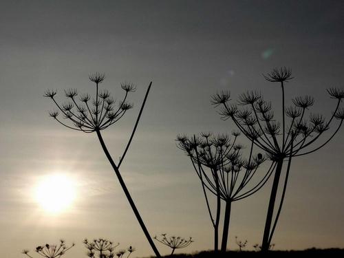 Evening light by SueMarshall