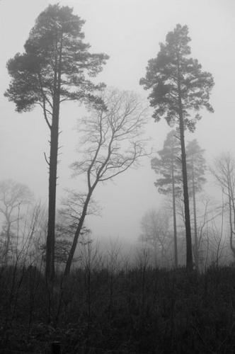 fog by yar123
