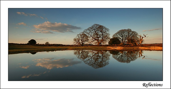 Reflections by Miles Herbert