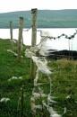 Gone Lambing