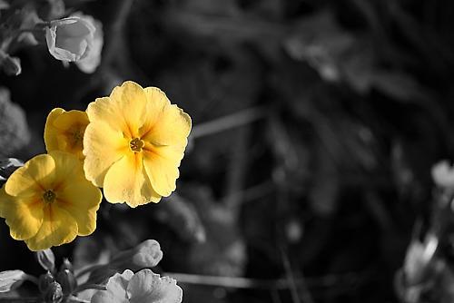 Spring Flowers by tim_everington