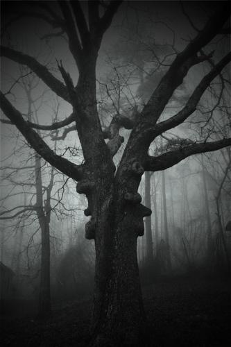 spooky tree by sarah kruger