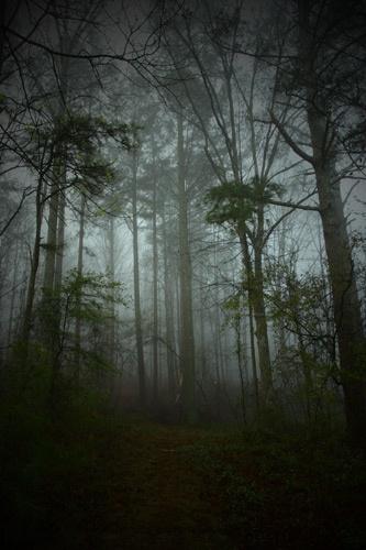 Misty Forrest by sarah kruger