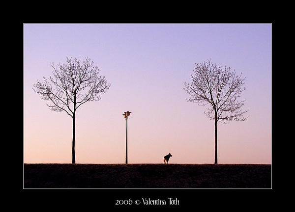 Lone Dog by yuno