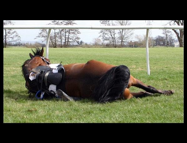 Spot the Jockey! by starstriders