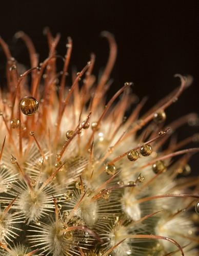 Cactus Macro Bubbles 2 by bentspace