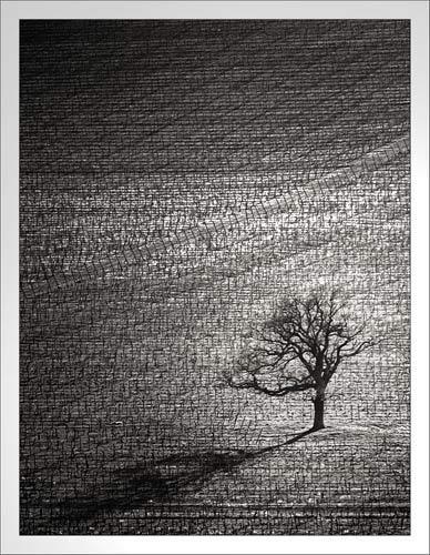 Last Elm by cconstab