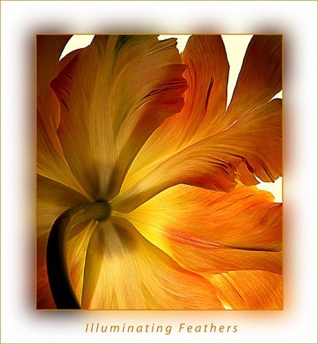 Illuminating Feathers by chrissycj