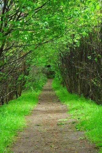 Path by scotcav