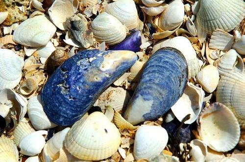 Shells by scotcav