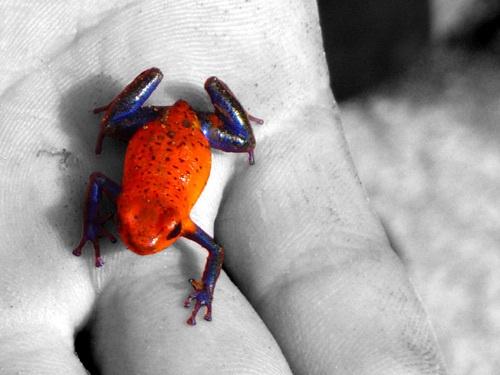 Frog by MrSpencer