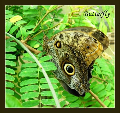 Butterfly by sotaylor