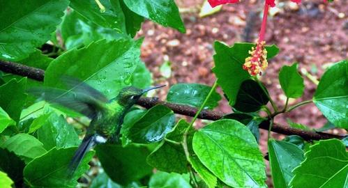 Humming bird by yar123