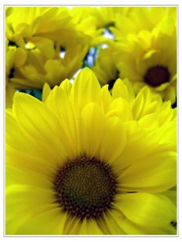 3... Easter Flowers by midgemckay
