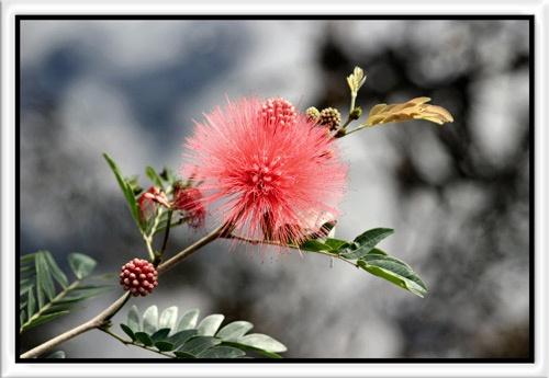 Wild Flower by wwwCOLEUKcom