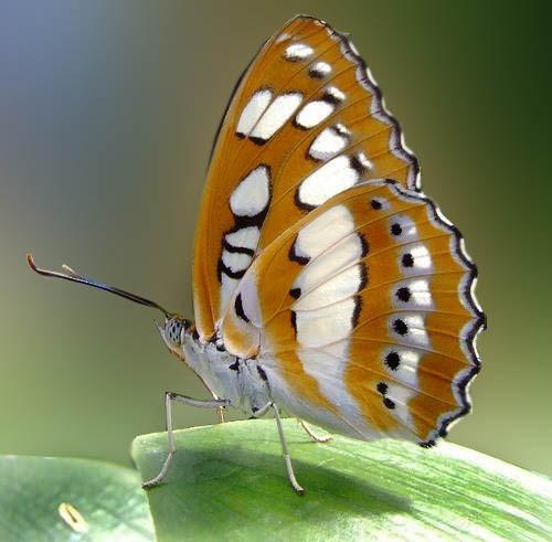butterfly by Kasuku