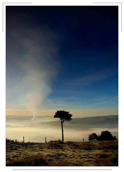 Keiths Tree by cdm36