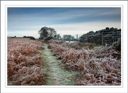 A frosty morn