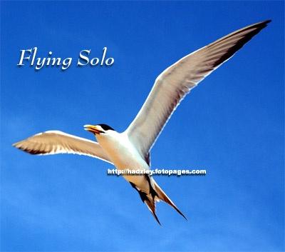 Flying Solo by hrockkk