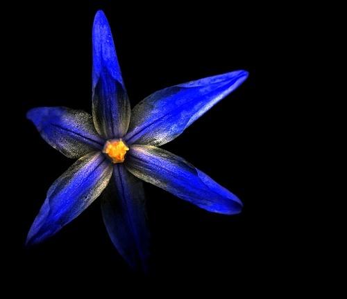 Bonnie Blue by dalischone