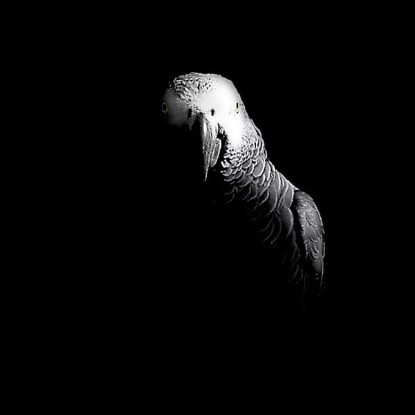The Birds II by phowtow