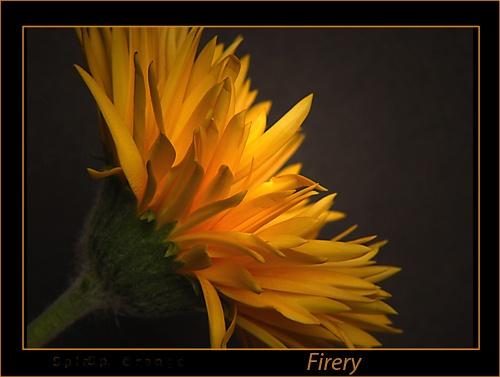 Firery by chrissycj