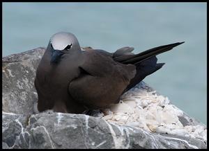 Seabird III by mariner