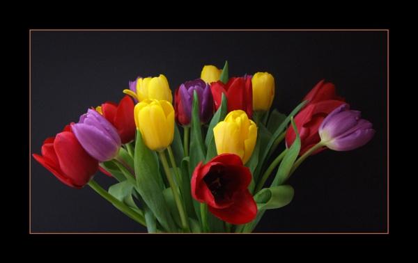 flower 142 by lizziew