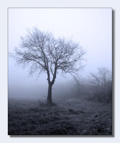 Mist #2 by Phoebecat