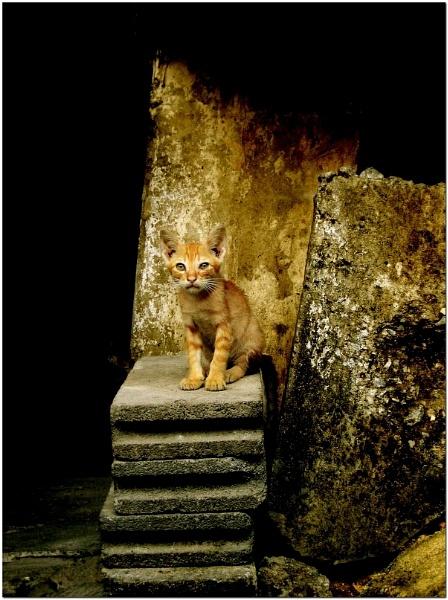 A Cat\'s Life by MediumSizeUnavailable