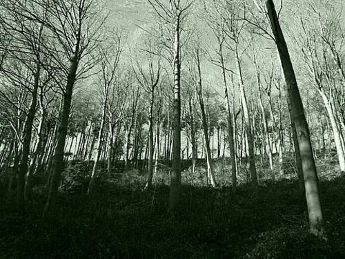 Green Woods by cbegg