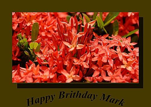 Mark Tull by Jaye