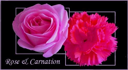 Rose & Carnation by sotaylor