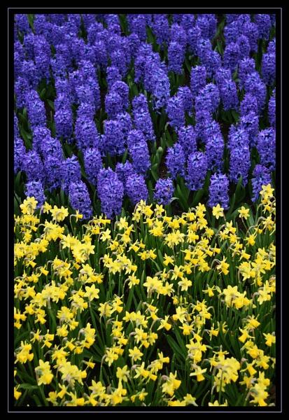 Blue and yellow by mathugamble