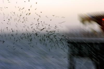 Sparrows under the Pier by dean1
