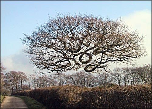 The Tree by BlueRoom