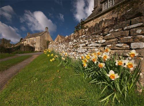 Spring Wall by strawman