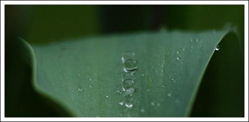 Dew Drops by jaglin