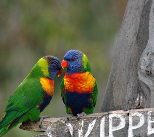 Birds by patrickfarrell
