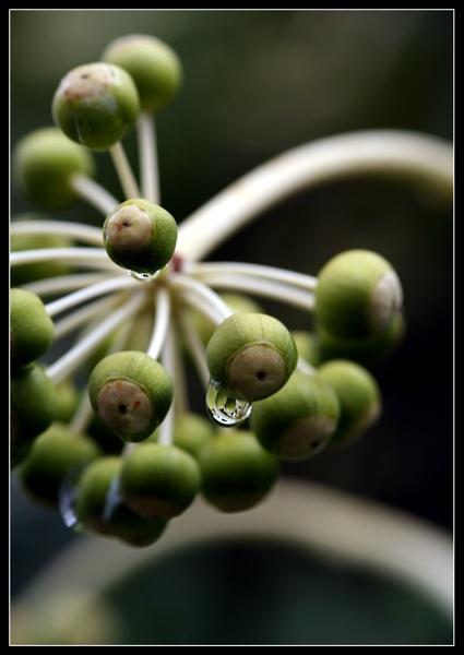 Berries & Drops by Morpyre