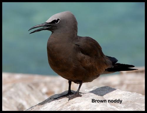 Seabird IV by mariner