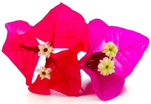 Flower by scotcav
