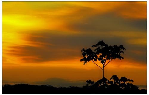 Amazon sunset 2 by philipr