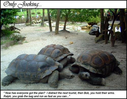 Turtle Grab by JoeConway