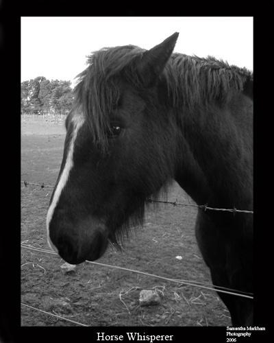Horse Whisperer by RaeHart