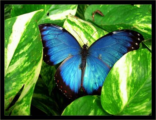 Butterfly 2 by sotaylor