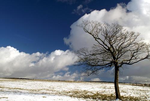 Solitary tree by jayhawk2000