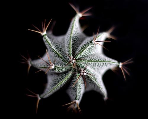 Cactus by dean1
