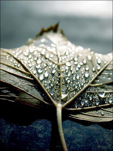 Rain by victoriasims